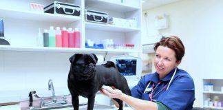 Como Montar Uma Clinica Veterinária
