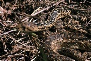 Como montar uma criação de cobras