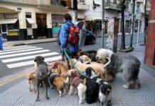 Como Iniciar um Serviço de Passear Com Cachorros