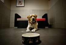 Como Montar um Hotel Para Cães