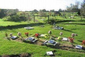 Como Investir em Cemitérios e Crematórios de Animais