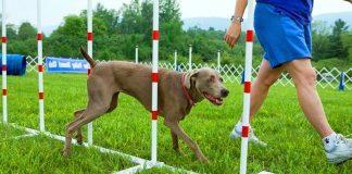 Adestramento de Cães - Ideia de Negócio Criativo