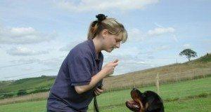 Adestramento de Cães – Ideia de Negócio Criativo