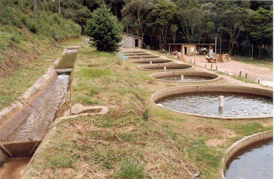 Cria o de peixes for Tanques circulares para acuicultura