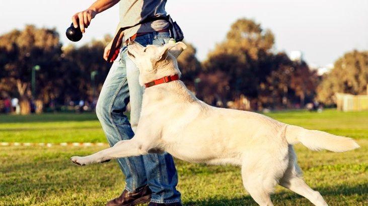 Como Abrir Uma Empresa de Adestramento de Cães
