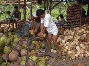 Como Montar Uma Fábrica de Óleo de Coco