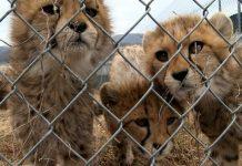Como Ter Uma Criação de Animais Silvestres em Cativeiro