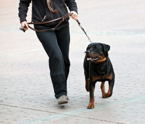 20 Negócios Para Abrir Com Menos de 10 Mil Passeadores de Cães