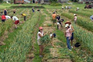7 Dicas Infalíveis Sobre Como Plantar Alho