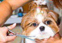 Nova Lei dos Pets Shops