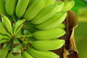Passo a Passo Para Fazer Plantio de Banana
