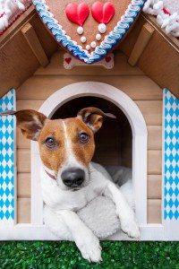 6 Passos Simples de Como Fazer Casinha de Cachorro