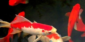Loja de Peixes Ornamentais